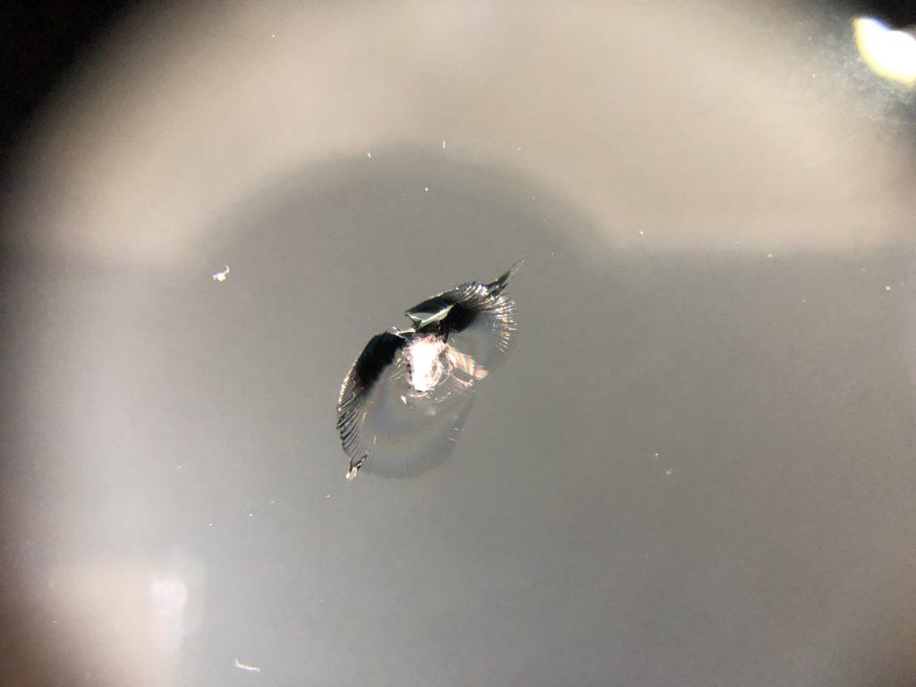 フロントガラスの飛び石キズ ガラスリペア